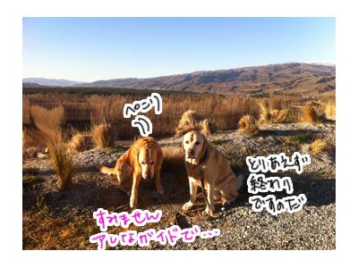 羊の国のラブラドール絵日記シニア、エビスと旅するニュージーランド「Mt.Difficulty2」