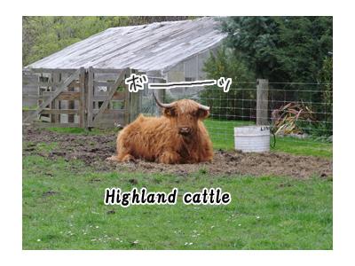 羊の国のラブラドール絵日記シニア!!写真日記迷い牛7