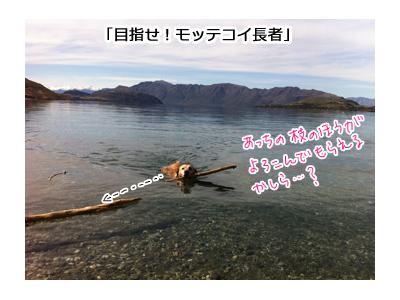 羊の国のラブラドール絵日記シニア!!写真日記、春だ!モッテコイ!3