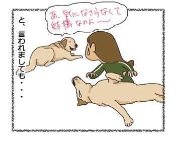 羊の国のラブラドール絵日記シニア!!4コマ漫画「クロエ先輩」3
