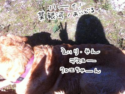 羊の国のラブラドール絵日記シニア!! ピクニック写真3