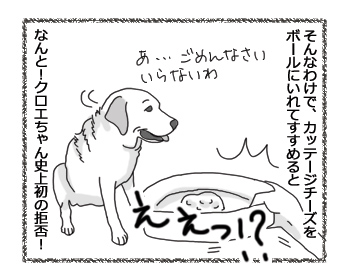 羊の国のラブラドール絵日記シニア!! 4コマ漫画「超!肉食系女子」1