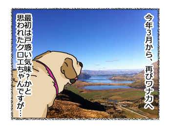 羊の国のラブラドール絵日記シニア!!野生のカン3