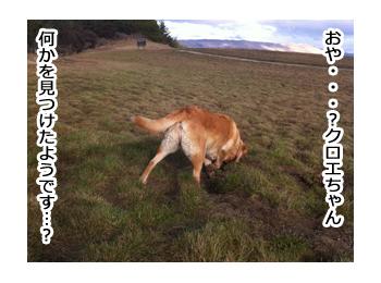 羊の国のラブラドール絵日記シニア!!野生のカン4