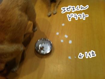羊の国のラブラドール絵日記シニア!! 引退犬支援カレンダー当選者の皆様2