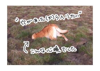 羊の国のラブラドール絵日記シニア!!、律儀写真1