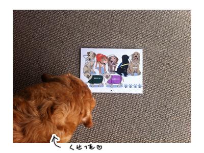 羊の国のラブラドール絵日記シニア!!引退犬支援カレンダー写真1