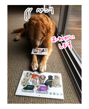 羊の国のラブラドール絵日記シニア!!引退犬支援カレンダー写真3