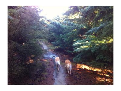 羊の国のラブラドール絵日記シニア!!、ある日森の中7