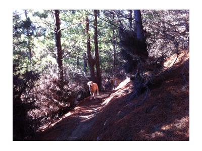 羊の国のラブラドール絵日記シニア!!、ある日森の中8