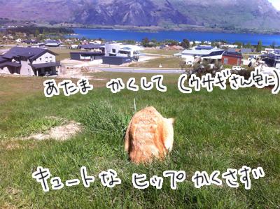 羊の国のラブラドール絵日記シニア!! 写真日記2