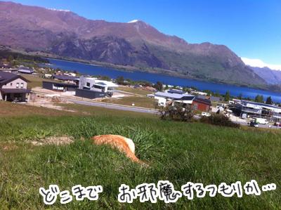 羊の国のラブラドール絵日記シニア!! 写真日記3