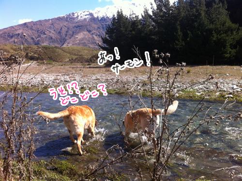羊の国のラブラドール絵日記シニア!!、写真日記8