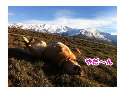 羊の国のラブラドール絵日記、クロエ誕生日記念企画2