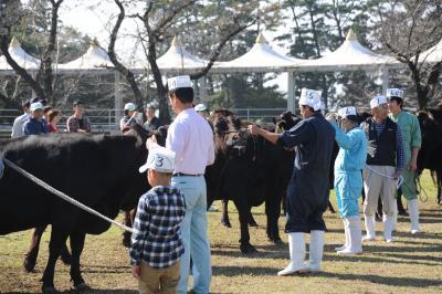 こんな小さい子どもさんも大人に混じって立派に牛を引いています