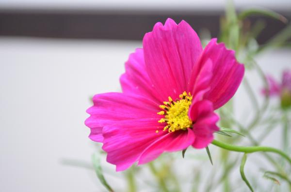 DSC_0105_convert_20121006231915.jpg