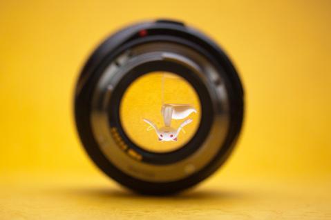 CANON EF50mm F1.2L  キュウベ