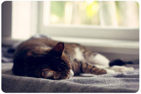 猫 居眠り うたた寝