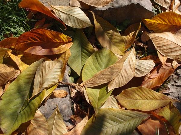 葉っぱ拡大