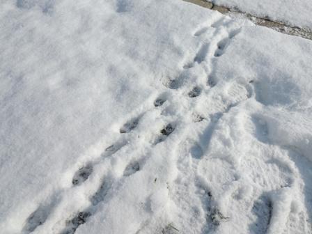 雪の後の晴れ (4)