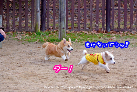 131230_yuasa.jpg