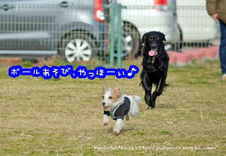 140103_dogrun3.jpg