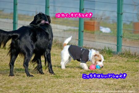 140103_dogrun7.jpg