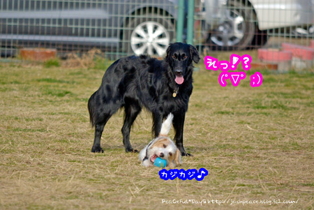 140103_dogrun8.jpg