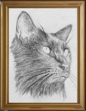 cat4079.jpg