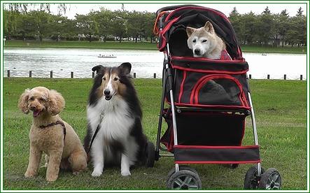 みんなで公園にいきました