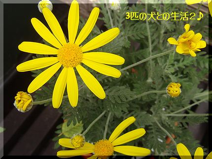 黄色がかわいい