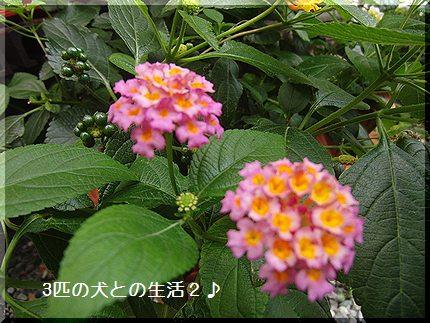 今日はお花