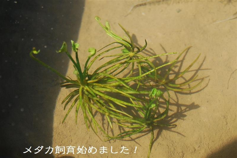 DSC_4632.jpg