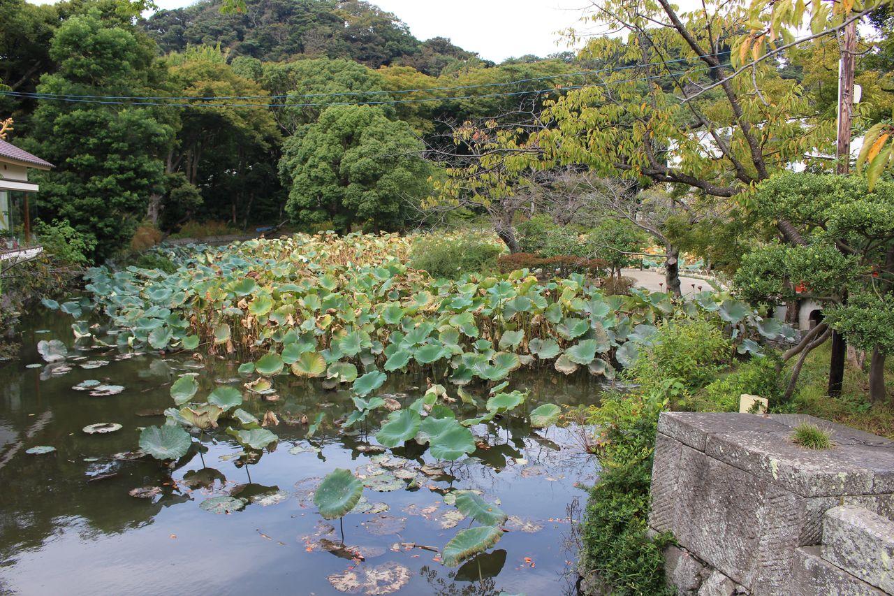 鶴岡八幡宮-10