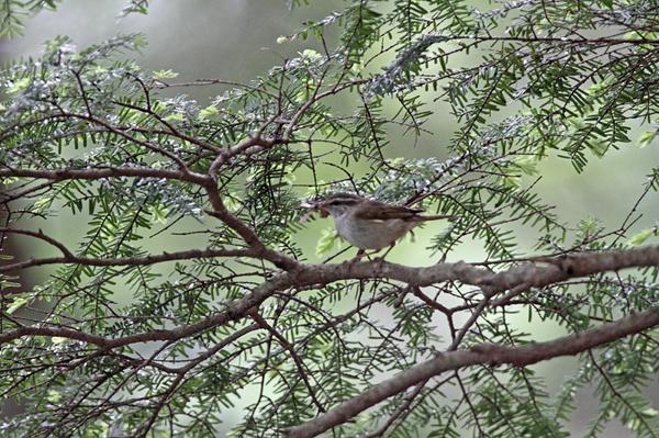 kimsbird5873.jpg
