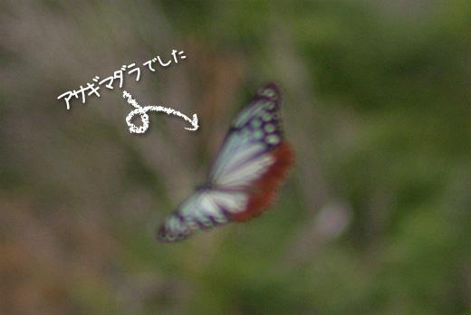 20120802-1.jpg