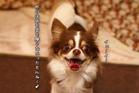 DSC048031219.jpg