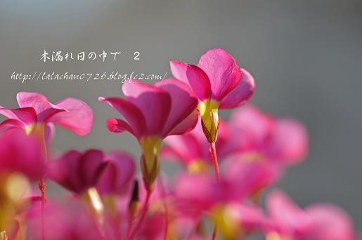 20131212204503e78.jpg