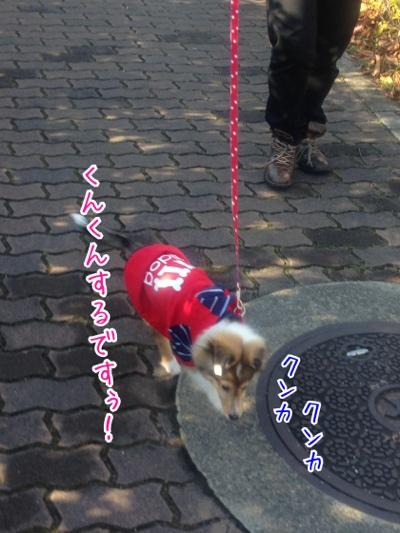 fc2blog_2013122614505537a.jpg