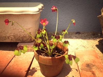 fc2blog_20120607195153bc9.jpg