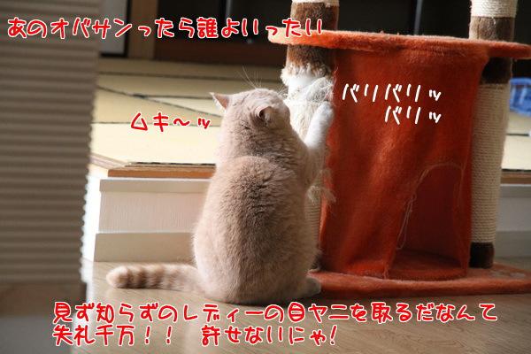 20130110003859d15.jpg