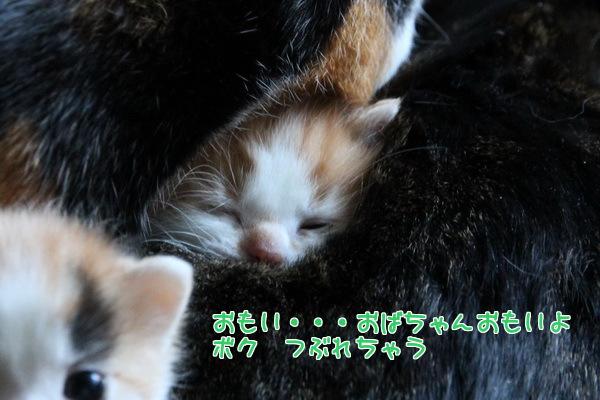 20130122005100aac.jpg