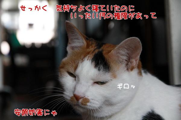 20130619000803e51.jpg