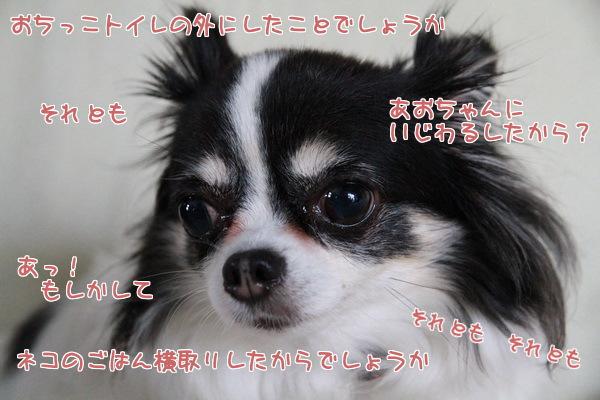 20130621005355e96.jpg