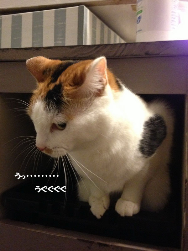 image_20121218202715.jpg