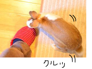 snap_monsan1122_20133515577.jpg