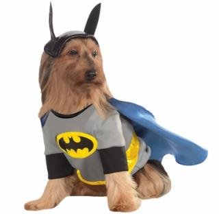 batman-dog-costume-xlarge-4_convert_20141030065632.jpg