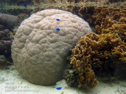 沖縄,海,珊瑚,壁紙