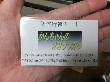 20131128225129fcb.jpg