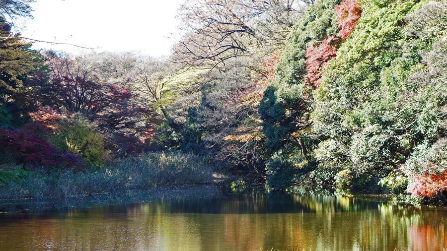 皇居乾通り 秋季一般公開